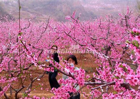 taohuayuan suzhou hunan tao hua yuan photos of land of peach blossoms