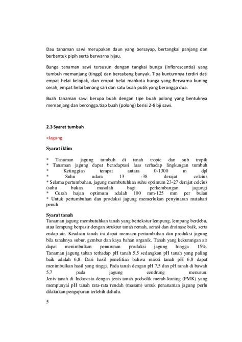 contoh laporan jagung contoh laporan praktikum ekologi