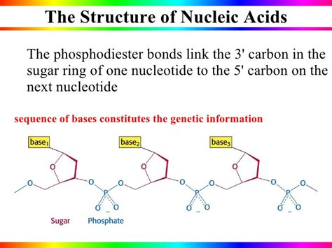 nucleic acid diagram nucleic acids
