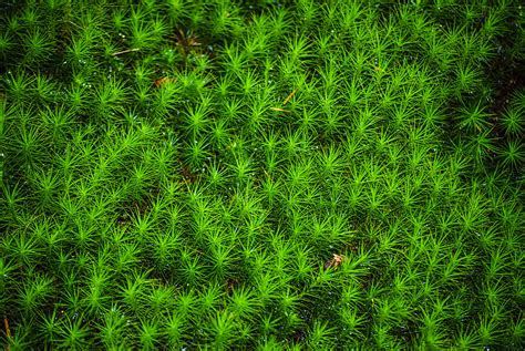japanese moss photograph by diego re