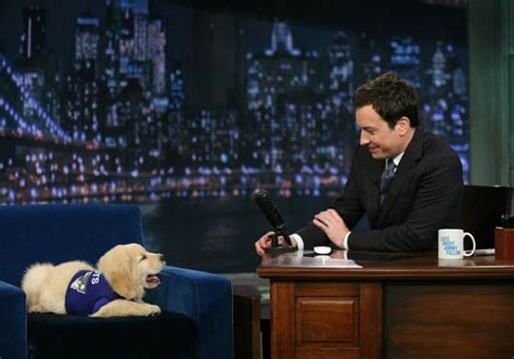 jimmy fallon puppies the best of jimmy fallon s puppy predictors the barkpost