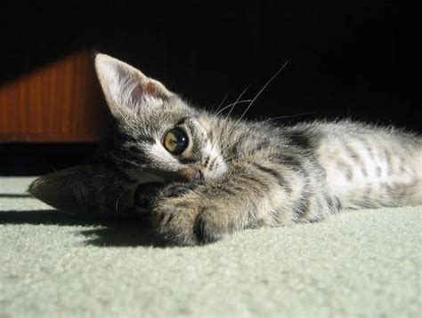 how to stop from on carpet how to stop your cat scratching carpet and furniture
