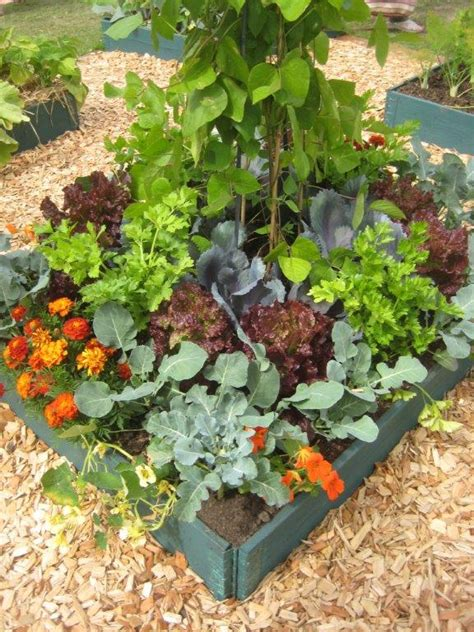 The Cottage Garden Society by Useful Links Info The Cottage Garden Society