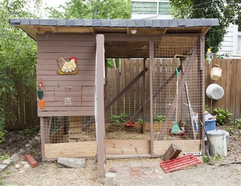 Backyard Chicken Blogs How To Raise Backyard Chickens Hirerush