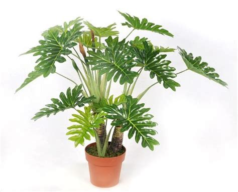 best indoor plants for no sunlight plants but no sunlight these plants can be your best buddy top 10 plants nurserylive