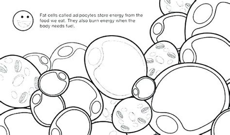 plant cell coloring sheet answers happy living