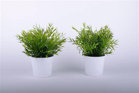tischdeko pflanzen pflanzen pflanze als tischdekoration