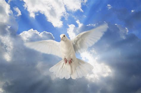 Beautiful Pentecostal Church Los Angeles #9: Dove-Holy-Spirit.jpg