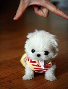 the 10 cutest tiny dogs ever