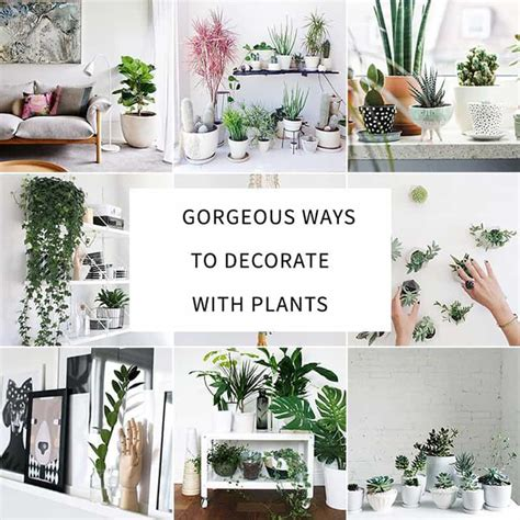 how to decorate your interior with green indoor plants and