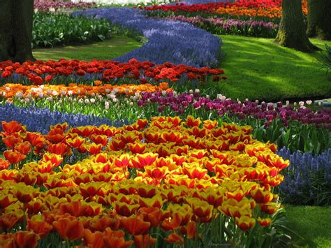 Amsterdam Flower Garden Colourful Tulips In Park Keukenhof Amsterdam Photography Inspirations Source