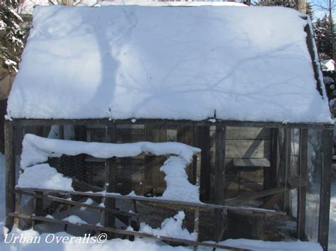 covered run winter benefits to a covered chicken run overalls