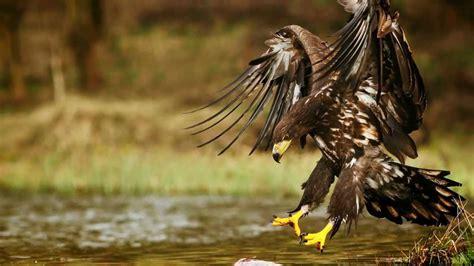 best wildlife photography wildlife photography my best nature photos 1080p