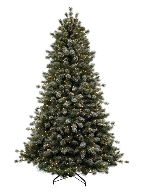 best 25 balsam tree ideas on pinterest balsam fir tree