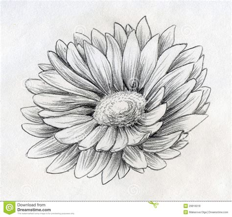 Sketches Flowers by Flower Pencil Arts Pencil Drawing Collection