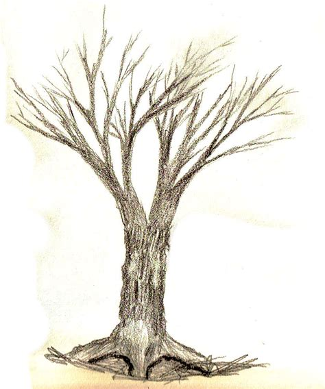 simple drawing tree how to draw trees guide questions answeredart