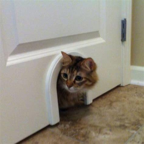 Cat Litter Closet by Diy Laundry Room Closet Litter Box Quot Door Quot Cut A Small