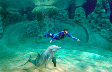 aquarium design usa systems engineering helps improve flow of visitors in