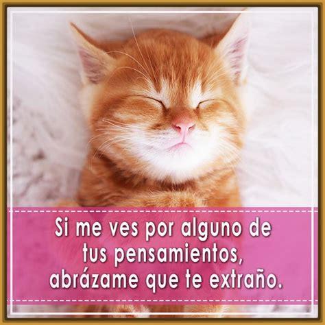 imagenes lindas de amor de gatitos imagenes de gatitos con frases bonitas para descargar