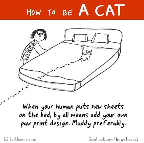 1452138923 how to be a cat how to be a cat 27 funny illustrations