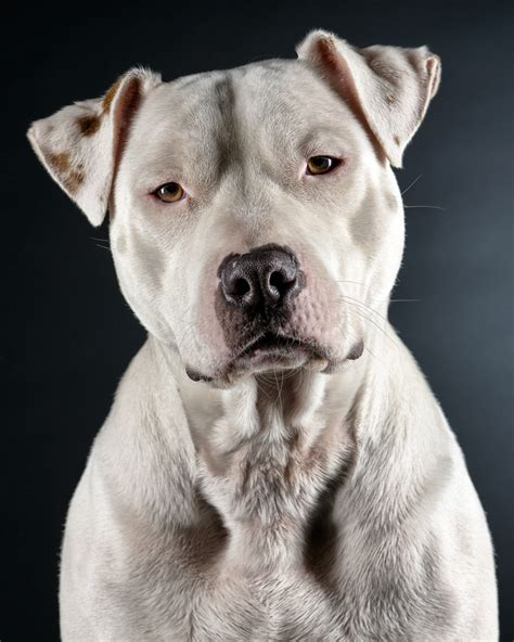 when do pitbull puppies open their school 13 vintage school supplies which do you miss fighting and pit