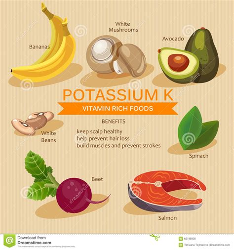 k y vegetables potassium foods vitamins and minerals foods illustrator
