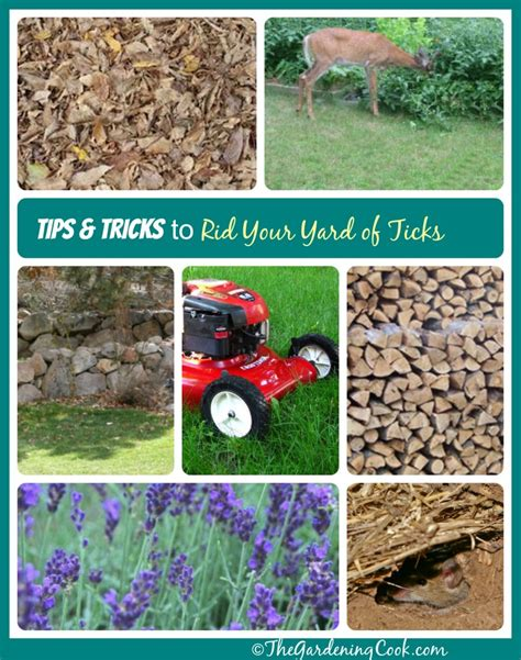 how to get rid of ticks around your yard the gardening cook