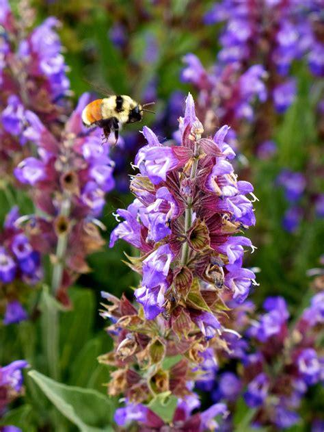 twilight garden series offers  summer programs  gardeners source colorado state