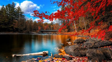 Northern Lights New Hampshire Red Autumn Leaves Water Wallpapers 1600x900 813190