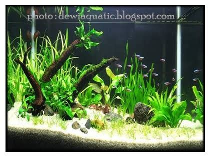 Pupuk Dasar Alternatif Aquascape 7evander padang cara menyusun setting aquarium aquascape