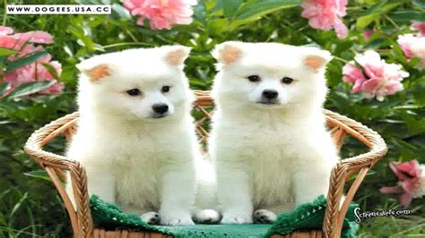 extremely puppies puppies pictures www pixshark images galleries with a bite