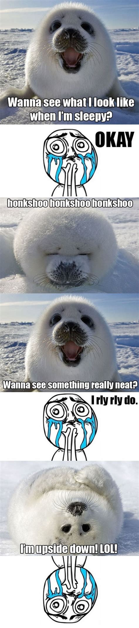 Baby Seal Meme - baby harp seal by thetoystorytailor on deviantart