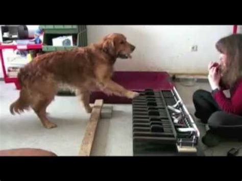 orecchio assoluto test pitch dogs play piano new version doovi
