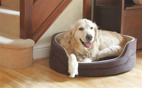 dog pillows and beds what is the purpose of different types of dogs beds