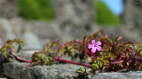 Pink Small Flowers small pink flower wallpaper flower wallpapers 20469