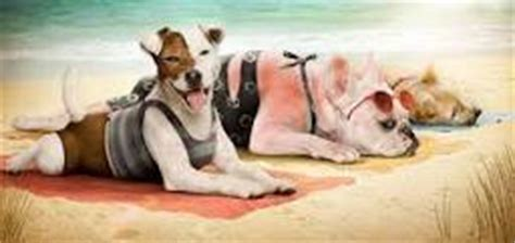 can dogs get sunburn sunburn symptoms types treatment home remedies prevention and