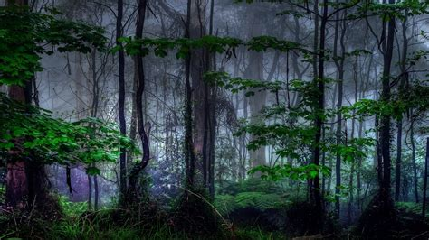 dark environment wallpaper dark forest wallpaper 1247744
