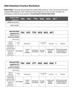 Transcription and translation practice worksheet-1