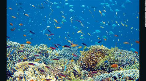 best snorkeling destinations 11 of the world s best snorkeling destinations cnn