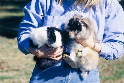 Tas Webe Lop rex rabbit burke s backyard