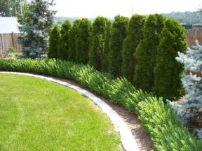 Privacy Trees For Backyard by Best 25 Privacy Fences Ideas On