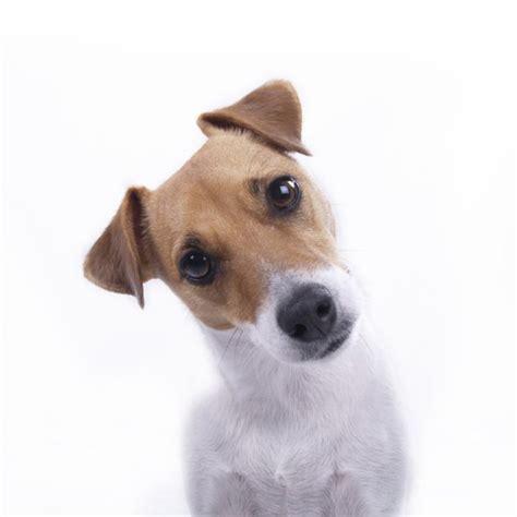 imagenes y videos tiernos para whatsapp imagen para whatsapp perfil de perritos lindos y tiernos