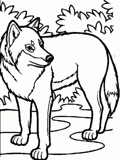 Arctic Wolf Coloring Pages animal jam arctic wolf coloring pages sketch coloring page