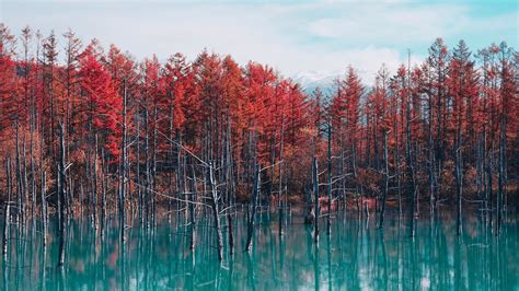 red lake ultra hd  wallpaper uhd papers
