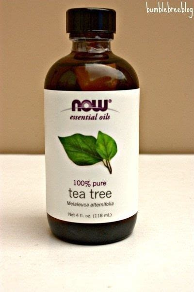 is tea tree oli for ingrowing hairs beauty diy coconut tea tree for ingrown hair best beauty oil tea tree for
