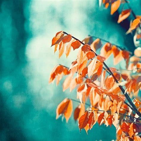 teal orange photography turquoise coral aqua nature print autumn fall wall large photo