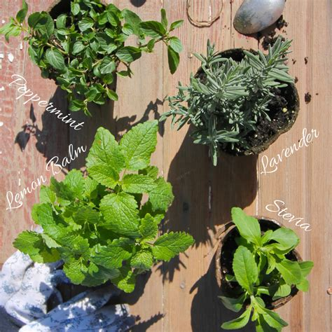 3 diy herb gardens you ll want to grow huffpost zero waste nerd diy tea herb garden