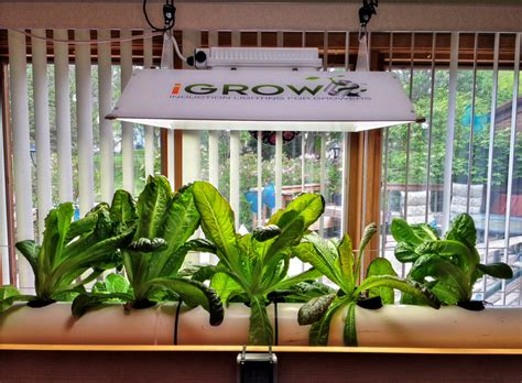 home hydroponics why growing your own makes sense