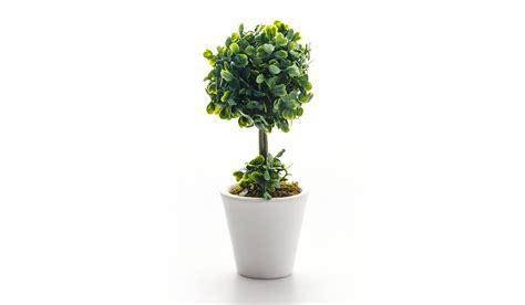 piante fiori fiori artificiali e piante come quelli veri