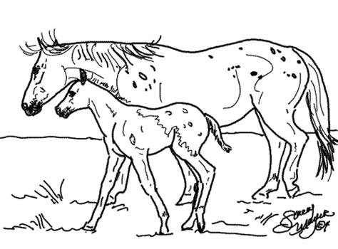 coloring pages of appaloosa horses appaloosa coloring pages wesharepics